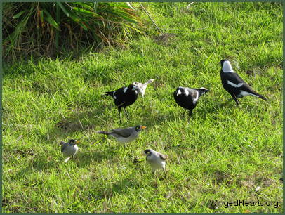 while their magpie and minnie friends potter below
